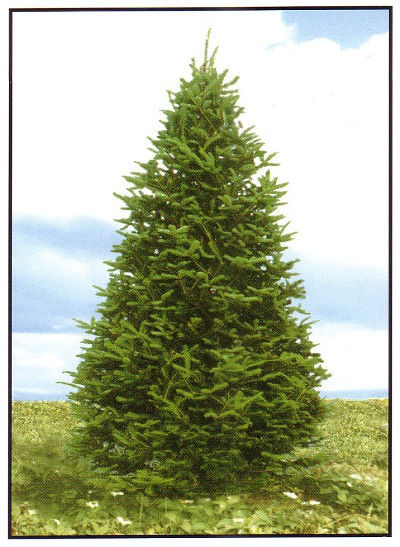Christmas Tree Stands For Real Trees